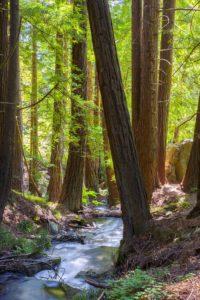 Ewoldsen Trail - hiking Big Sur