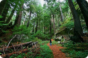 Tanbark Trail hiking big sur