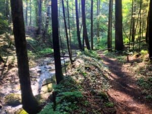 The Buck Trail Red River Gorge Hiking