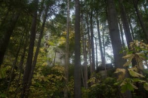 The Wildcat Trail Red River Gorge Hiking