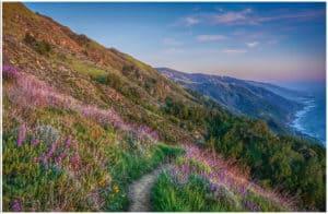 Hiking Big Sur - Vicente Flat Trail
