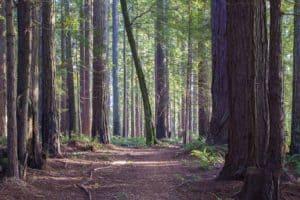 Big Sur Hiking Trails - Willow Creek Trail