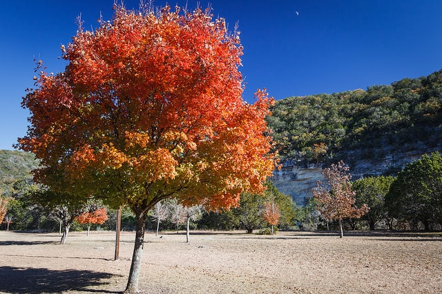 Texas Hiking Spots Lost Maples State Natural Area