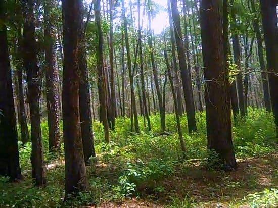 Texas Hiking Spots Sam Houston National Forest