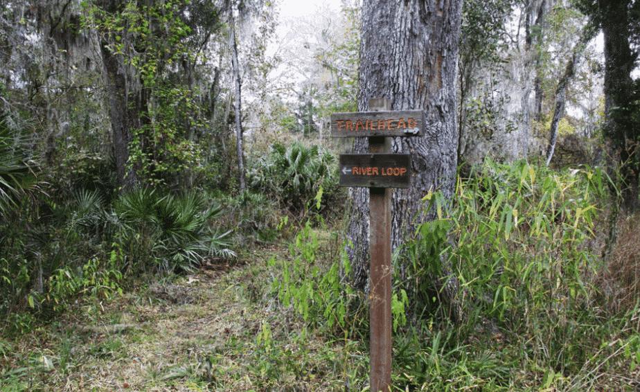 Camping in Florida - Potts Preserve