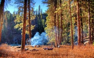 Camping For FREE In The US & Canada - Woods